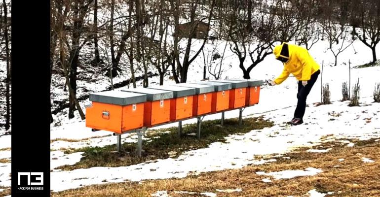 operazioni in apiario con ormabee smartphone